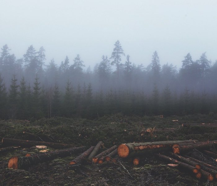 Ontbossing milieu